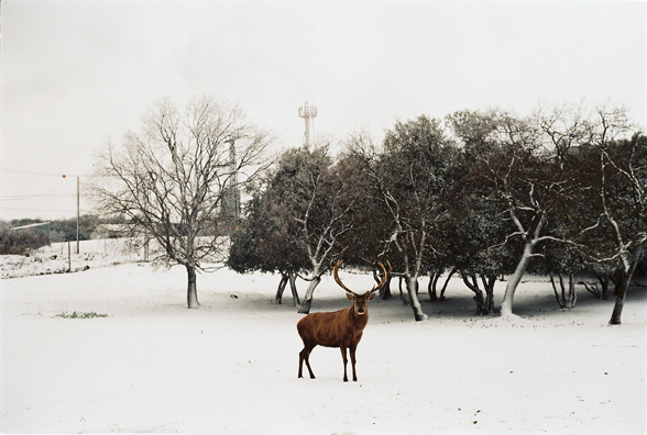 amit berlowitz Winter